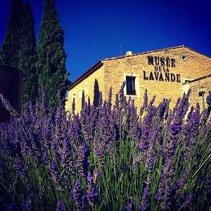 Nice airport transfr to Lavender museum at the Valensole plateau