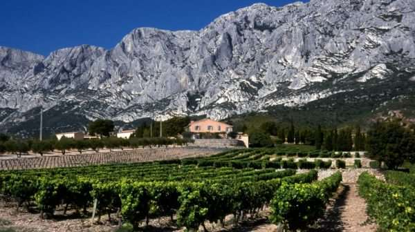 Visit of a vineyard in Provence from Nice airport